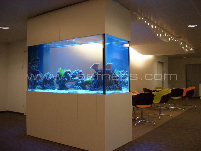 projekt reefness aquarienbau zekia. Black Bedroom Furniture Sets. Home Design Ideas